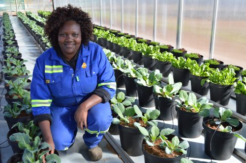 Motlalepula Magini, a resident of the Ikageng township, wants to empower others with the knowledge and skills she is gaining from SUNfarming and the North-West University. Photo: Supplied.