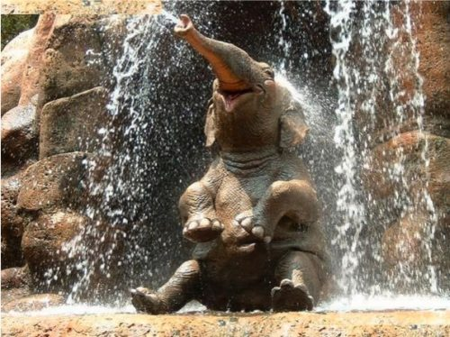 This elephant is enoying the fact there are almost no water restrictions in nature! Credit: FunPic