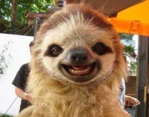 What's this Sloth so happy about? Credit: Pinterest