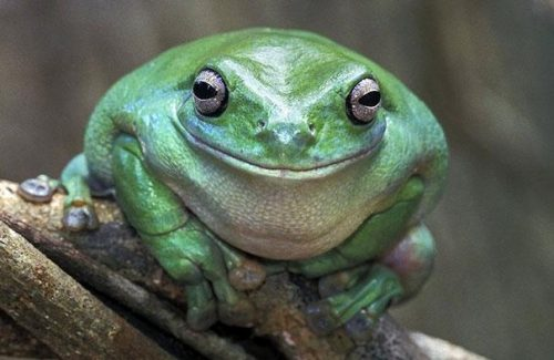 This frog is giving us his best impression of George Clooney. Credit: turtlehurtled.com
